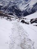 лагерь Непал annapurna низкопробный Стоковые Изображения