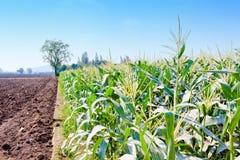 Аграрная жизнь предпосылки естественной фермы мозоли Стоковая Фотография