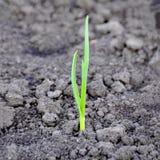Аграрная индустрия и новая молодая жизнь в концепции природы - sma Стоковое Изображение RF