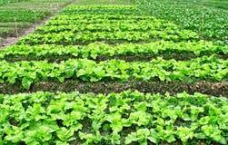 Аграрная индустрия Стоковая Фотография