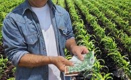 Аграрная концепция, фермер, деньги и поле стоковые изображения rf