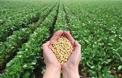 Аграрная принципиальная схема Стоковая Фотография RF