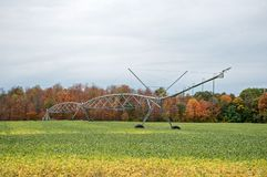 Аграрная система брызгать в соях Стоковое Изображение