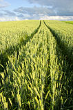 аграрное колесо пшеницы метки поля автомобиля предпосылки Стоковое Изображение