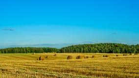 аграрное лето ландшафта поле зерна после сбора с связками сухой соломы под ясным голубым небом Стоковая Фотография RF