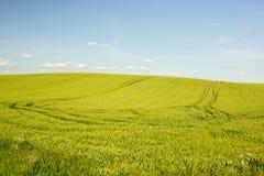 Аграрное поле в Хорватии Стоковые Фото