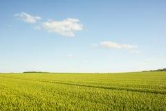 Аграрное поле в Хорватии Стоковая Фотография