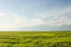 Аграрное поле в Хорватии Стоковое Изображение RF