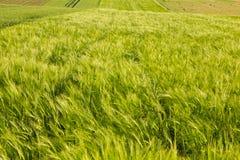 Аграрное поле в Хорватии Стоковое Изображение