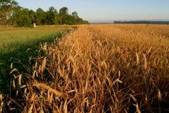аграрное поле осени Стоковая Фотография RF