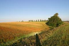аграрное поле осени Стоковая Фотография