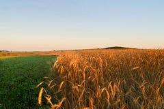 аграрное поле осени Стоковое Изображение