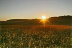 аграрное поле осени Стоковые Изображения