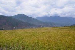 Аграрное поле с предпосылкой горы На пути к Chimi Lhakhang Lobesa Район Punakha стоковые изображения