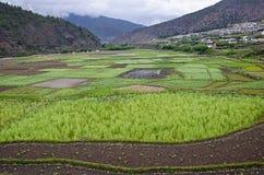 Аграрное поле с предпосылкой горы На пути к Chimi Lhakhang Lobesa Район Punakha стоковые фото