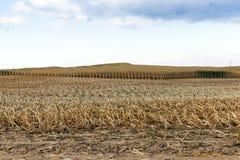 Аграрное поле, хлопья Стоковые Изображения