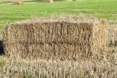 Аграрное поле, хлопья Стоковая Фотография RF