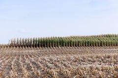 Аграрное поле, хлопья Стоковые Фото