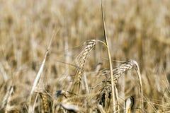 Аграрное поле, хлопья Стоковое фото RF