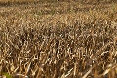 Аграрное поле, хлопья Стоковое Изображение RF