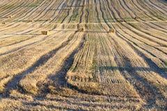 Аграрное поле, хлопья Стоковые Фотографии RF