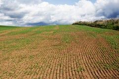 аграрное поле Стоковые Фотографии RF