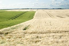аграрное поле Стоковая Фотография RF