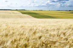 аграрное поле Стоковые Фото