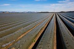 аграрное поле Стоковая Фотография