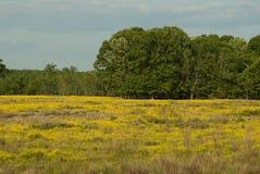 Аграрное поле, Миссиссипи Стоковая Фотография RF