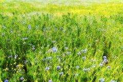 аграрное поле с синью и желтым цветом стоковое фото