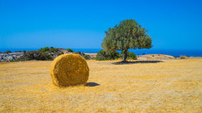 Аграрное сельскохозяйственное угодье, Кипр Стоковое Фото