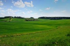 Аграрное холмистое зеленое поле с голубым небом Стоковое Фото