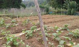Аграрные края в Ambegoda Стоковая Фотография RF