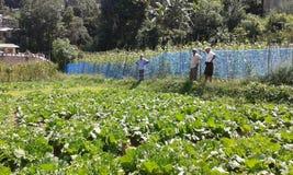 Аграрные края в Ambegoda Стоковые Изображения