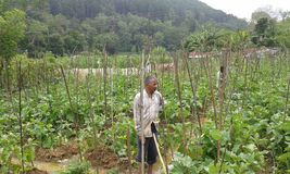 Аграрные края в Ambegoda Стоковое Изображение