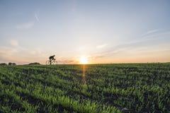 Аграрные поля и человек едут велосипед в заходе солнца Ехать велосипед на заходе солнца уклад жизни принципиальной схемы здоровый Стоковые Фото