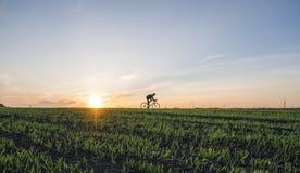 Аграрные поля и человек едут велосипед в заходе солнца Ехать велосипед на заходе солнца уклад жизни принципиальной схемы здоровый Стоковая Фотография RF