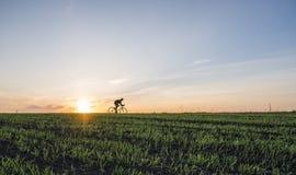Аграрные поля и человек едут велосипед в заходе солнца Ехать велосипед на заходе солнца уклад жизни принципиальной схемы здоровый Стоковое Фото