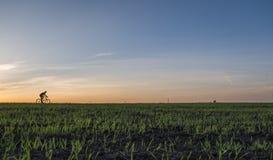 Аграрные поля и blury человек едут велосипед в заходе солнца Ехать велосипед на заходе солнца уклад жизни принципиальной схемы зд Стоковая Фотография RF