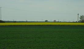 Аграрные поля с соей и канола на пасмурный день стоковые изображения rf