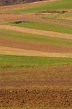 аграрные поля Стоковая Фотография