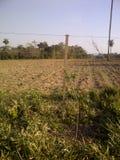 Аграрные поле, зеленые растения и деревья Стоковая Фотография RF