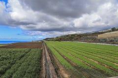 Аграрные поля в Тенерифе Стоковая Фотография