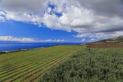 Аграрные поля в Тенерифе Стоковая Фотография RF