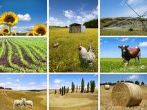аграрные принципиальные схемы Стоковые Изображения RF