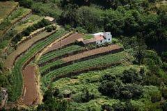 аграрные террасы la gomera Стоковые Изображения