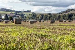 аграрные bales hay ландшафт Стоковая Фотография RF