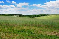 аграрный ландшафт Стоковая Фотография
