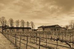 Аграрный год сбора винограда сцены Стоковая Фотография RF